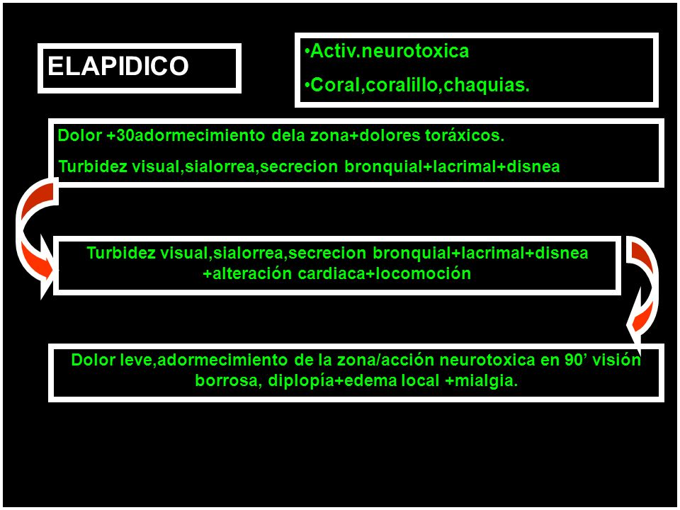 ELAPIDICO Dolor +30adormecimiento dela zona+dolores toráxicos. Turbidez visual,sialorrea,secrecion bronquial+lacrimal+disnea Turbidez visual,sialorrea