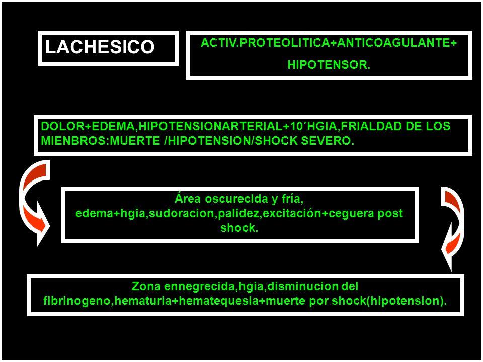 LACHESICO ACTIV.PROTEOLITICA+ANTICOAGULANTE+ HIPOTENSOR. DOLOR+EDEMA,HIPOTENSIONARTERIAL+10´HGIA,FRIALDAD DE LOS MIENBROS:MUERTE /HIPOTENSION/SHOCK SE