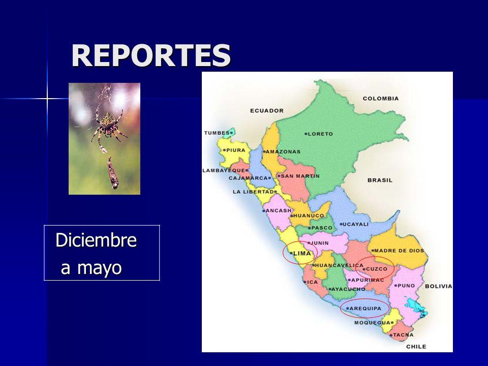 REPORTES REPORTES Diciembre Diciembre a mayo a mayo