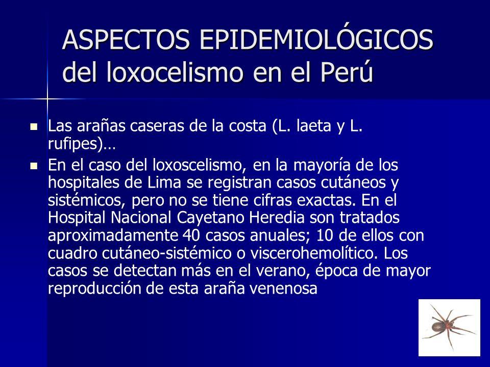 ASPECTOS EPIDEMIOLÓGICOS del loxocelismo en el Perú Las arañas caseras de la costa (L. laeta y L. rufipes)… En el caso del loxoscelismo, en la mayoría