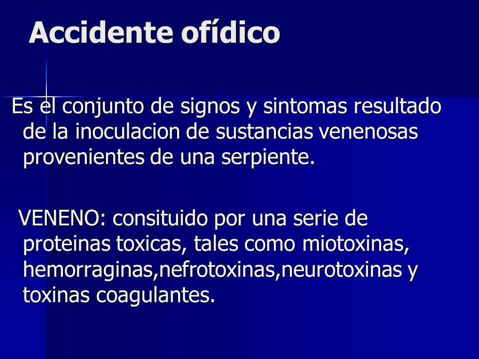 Accidente ofídico Es el conjunto de signos y sintomas resultado de la inoculacion de sustancias venenosas provenientes de una serpiente. Es el conjunt