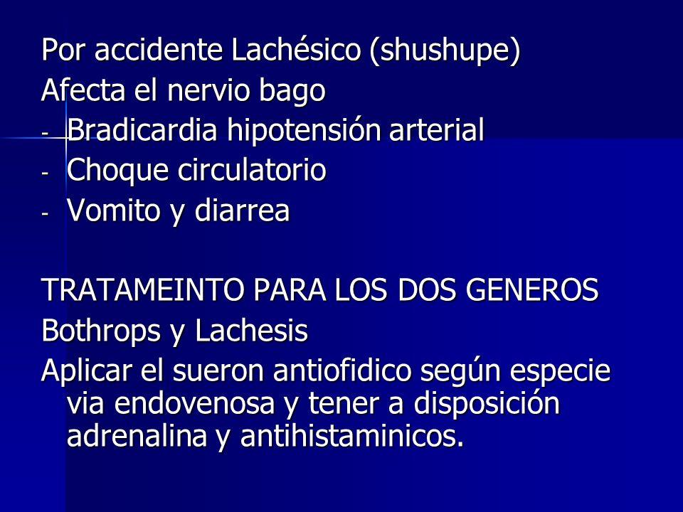 Por accidente Lachésico (shushupe) Afecta el nervio bago - Bradicardia hipotensión arterial - Choque circulatorio - Vomito y diarrea TRATAMEINTO PARA