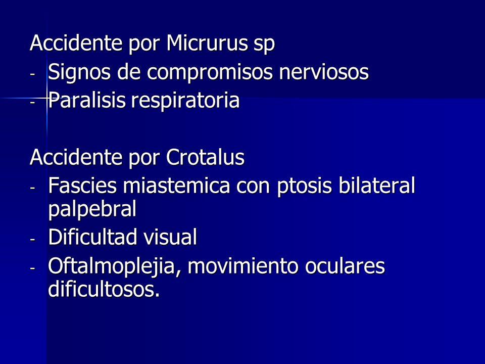 Accidente por Micrurus sp - Signos de compromisos nerviosos - Paralisis respiratoria Accidente por Crotalus - Fascies miastemica con ptosis bilateral