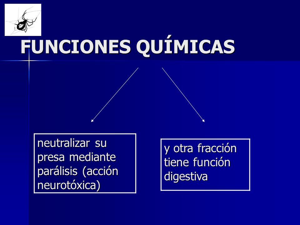FUNCIONES QUÍMICAS neutralizar su presa mediante parálisis (acción neurotóxica) y otra fracción tiene función digestiva
