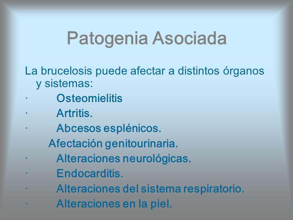 Patogenia Asociada La brucelosis puede afectar a distintos órganos y sistemas: · Osteomielitis · Artritis. · Abcesos esplénicos. Afectación genitourin