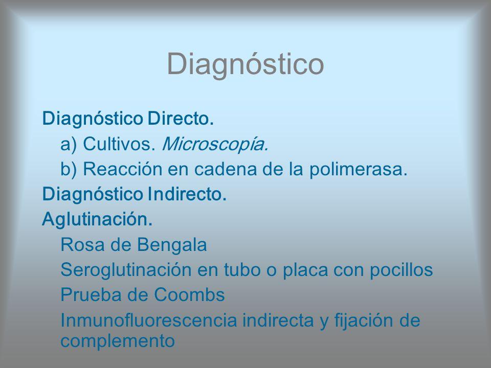 Diagnóstico Diagnóstico Directo. a) Cultivos. Microscopía. b) Reacción en cadena de la polimerasa. Diagnóstico Indirecto. Aglutinación. Rosa de Bengal