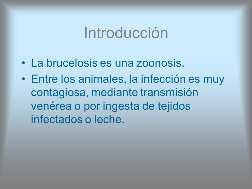 Introducción La brucelosis es una zoonosis. Entre los animales, la infección es muy contagiosa, mediante transmisión venérea o por ingesta de tejidos