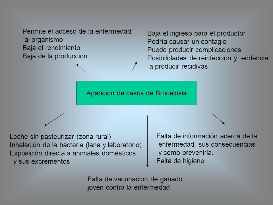 Aparición de casos de Brucelosis Leche sin pasteurizar (zona rural) Inhalación de la bacteria (lana y laboratorio) Exposición directa a animales domés