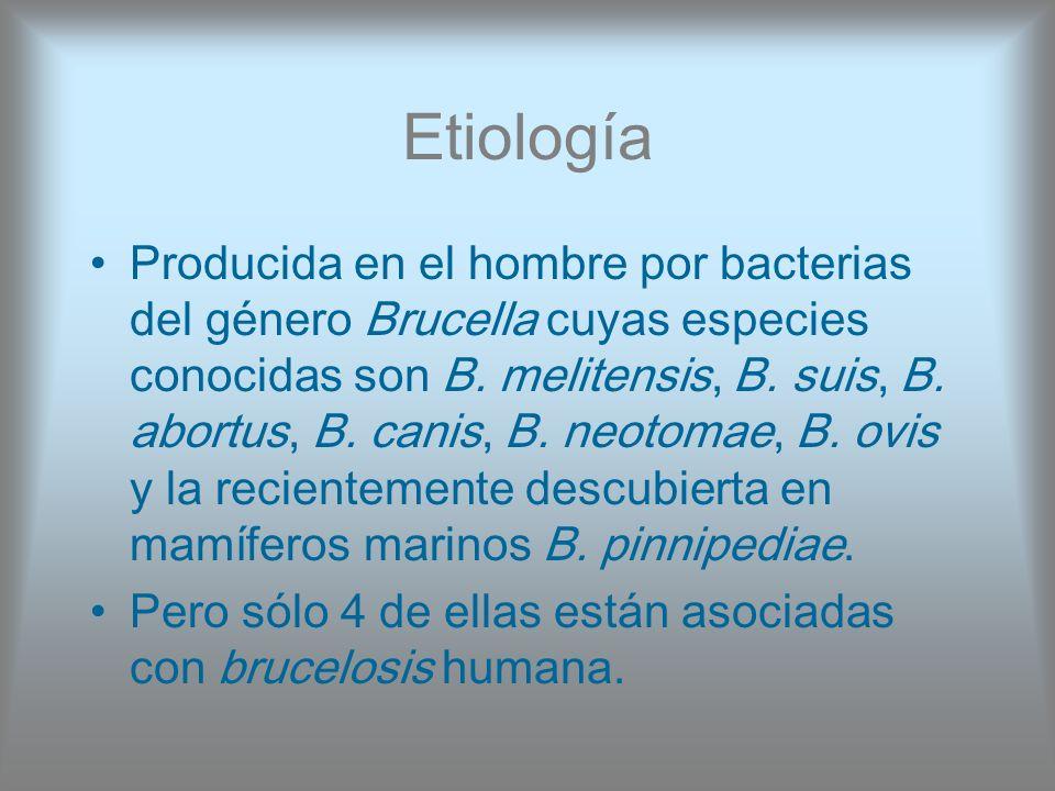 Etiología Producida en el hombre por bacterias del género Brucella cuyas especies conocidas son B. melitensis, B. suis, B. abortus, B. canis, B. neoto