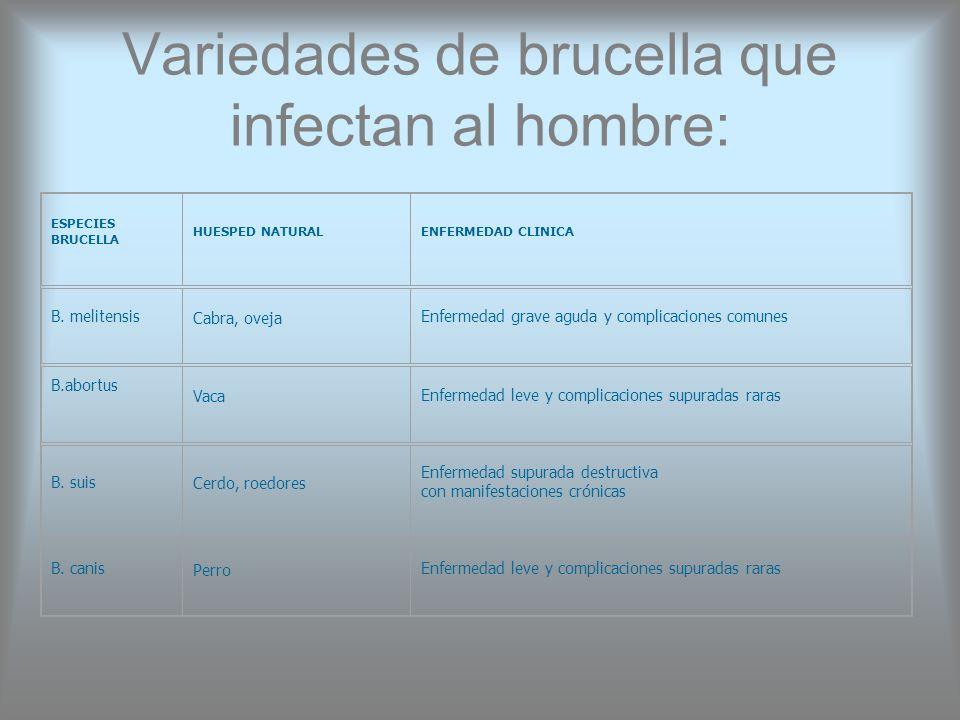 Variedades de brucella que infectan al hombre: ESPECIES BRUCELLA HUESPED NATURALENFERMEDAD CLINICA B. melitensis Cabra, oveja Enfermedad grave aguda y