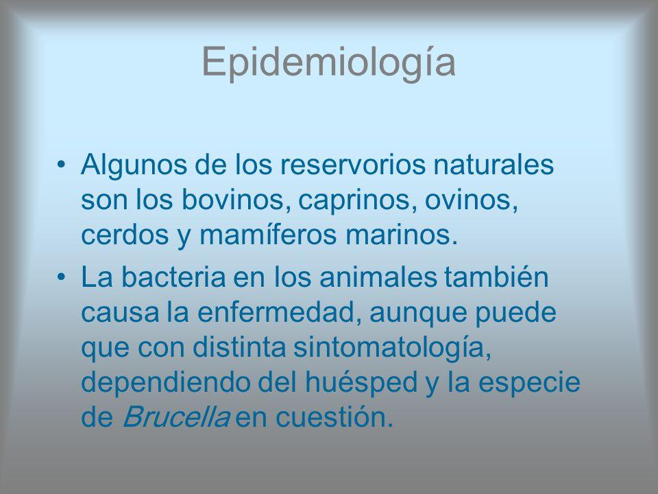 Epidemiología Algunos de los reservorios naturales son los bovinos, caprinos, ovinos, cerdos y mamíferos marinos. La bacteria en los animales también