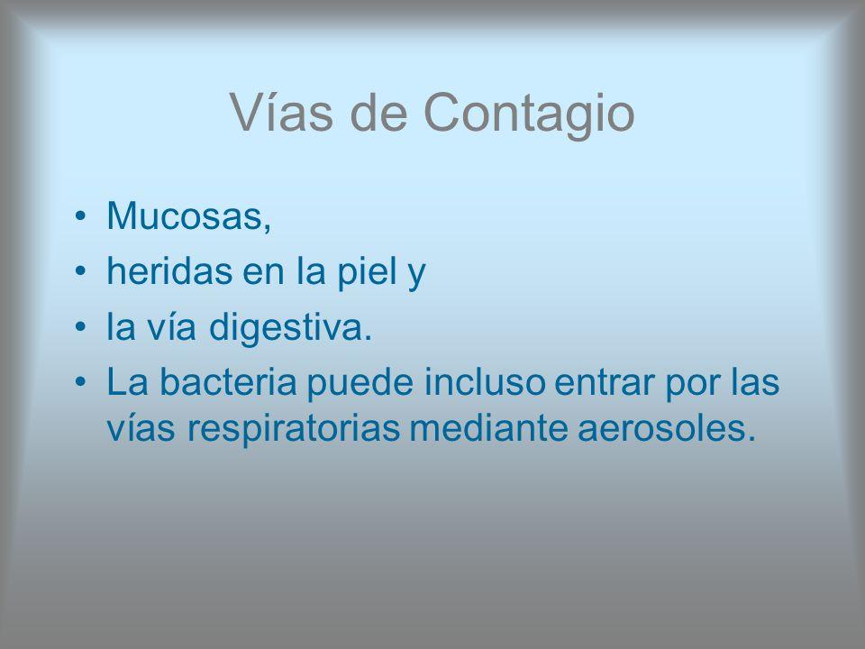 Vías de Contagio Mucosas, heridas en la piel y la vía digestiva. La bacteria puede incluso entrar por las vías respiratorias mediante aerosoles.
