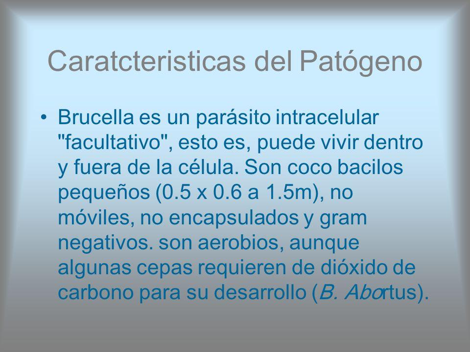 Caratcteristicas del Patógeno Brucella es un parásito intracelular