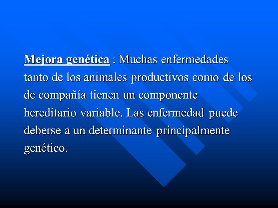 Mejora genética : Muchas enfermedades tanto de los animales productivos como de los de compañía tienen un componente hereditario variable. Las enferme