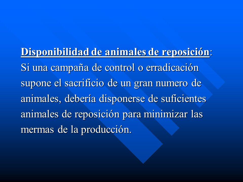 Disponibilidad de animales de reposición: Si una campaña de control o erradicación supone el sacrificio de un gran numero de animales, debería dispone
