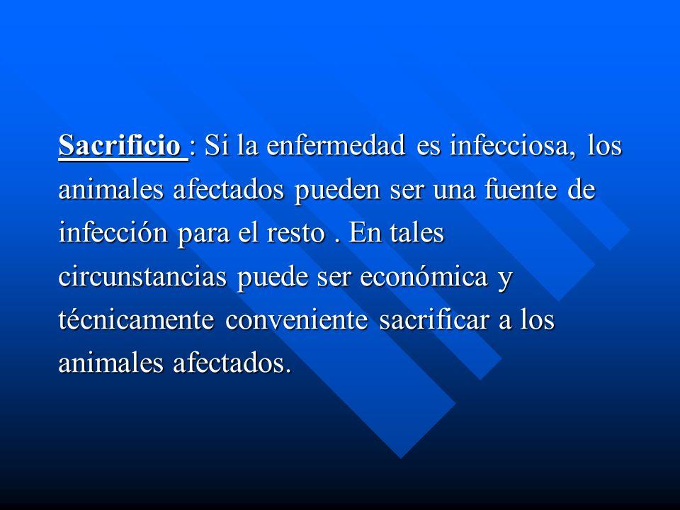 Sacrificio : Si la enfermedad es infecciosa, los animales afectados pueden ser una fuente de infección para el resto. En tales circunstancias puede se