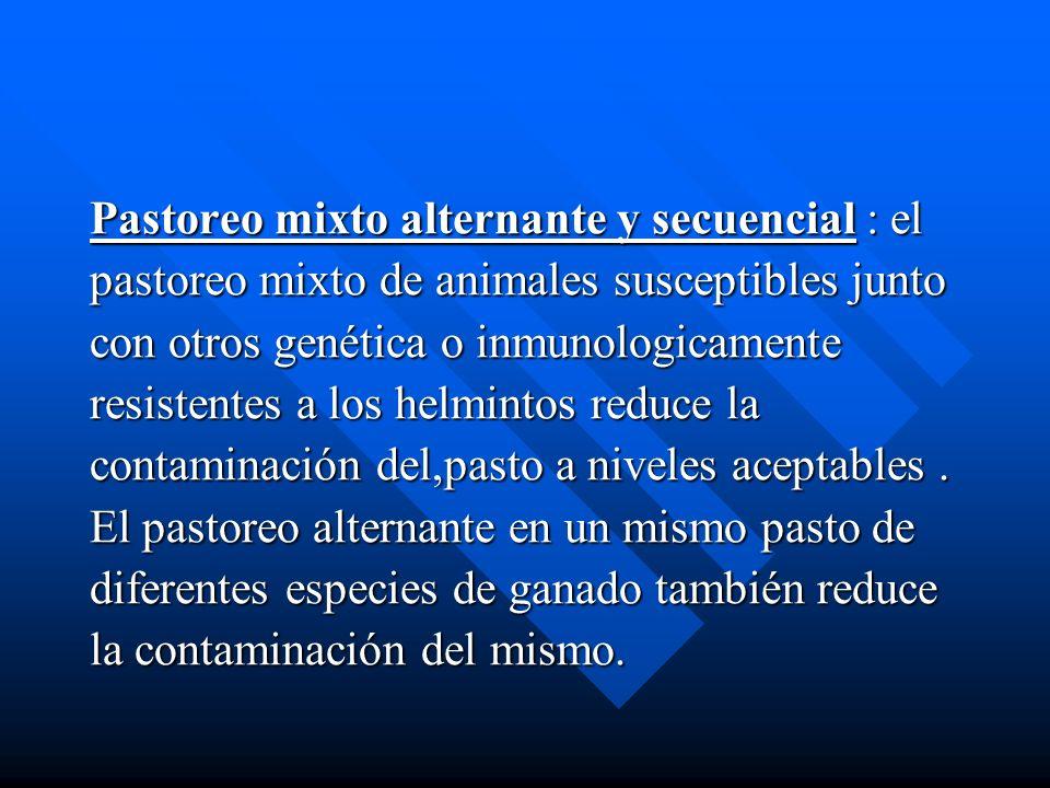 Pastoreo mixto alternante y secuencial : el pastoreo mixto de animales susceptibles junto con otros genética o inmunologicamente resistentes a los hel