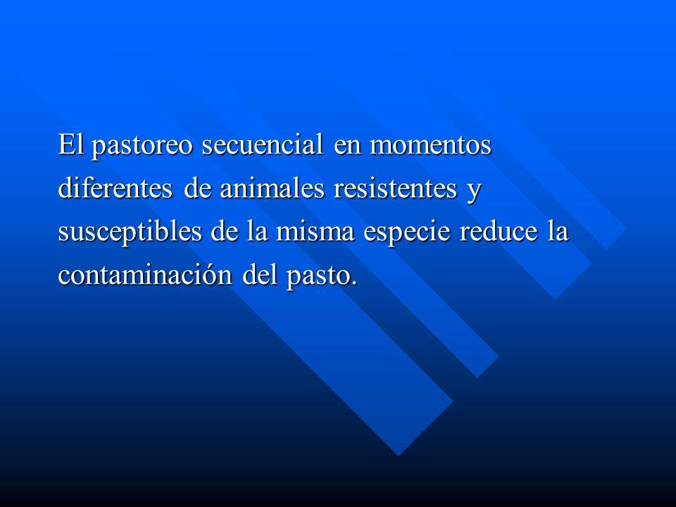 El pastoreo secuencial en momentos diferentes de animales resistentes y susceptibles de la misma especie reduce la contaminación del pasto.