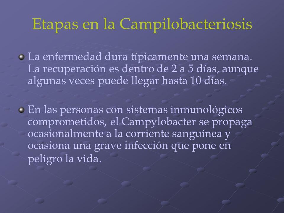 Etapas en la Campilobacteriosis La enfermedad dura típicamente una semana. La recuperación es dentro de 2 a 5 días, aunque algunas veces puede llegar