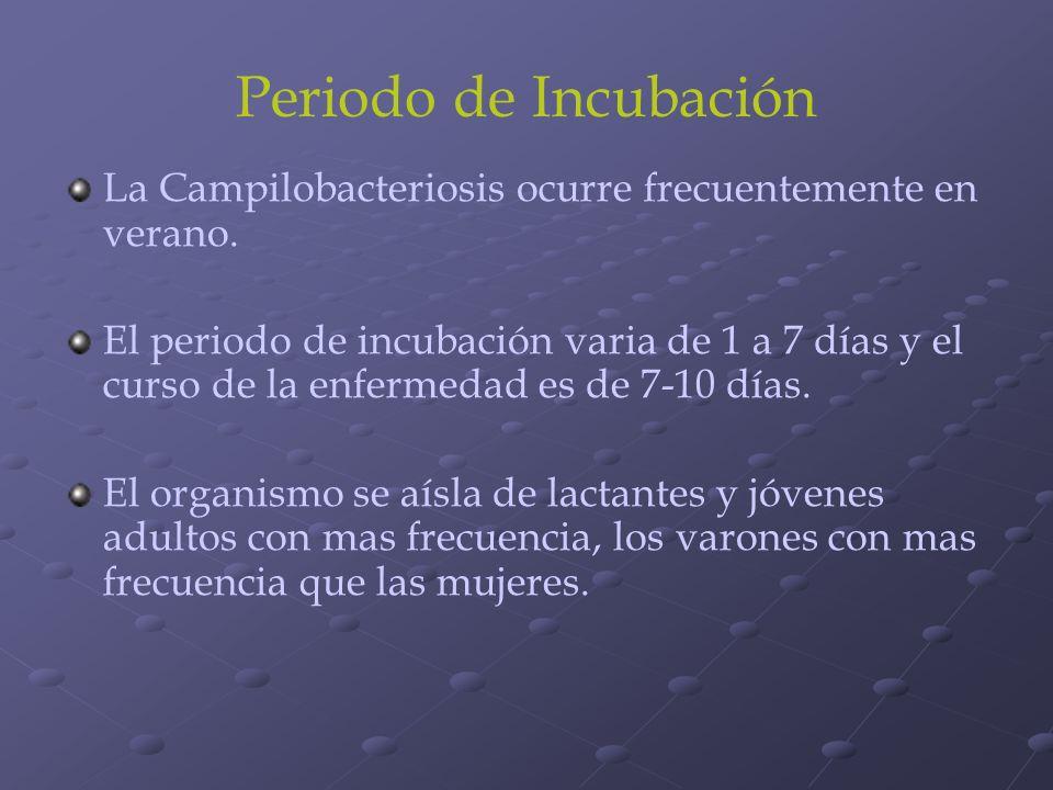 Periodo de Incubación La Campilobacteriosis ocurre frecuentemente en verano. El periodo de incubación varia de 1 a 7 días y el curso de la enfermedad