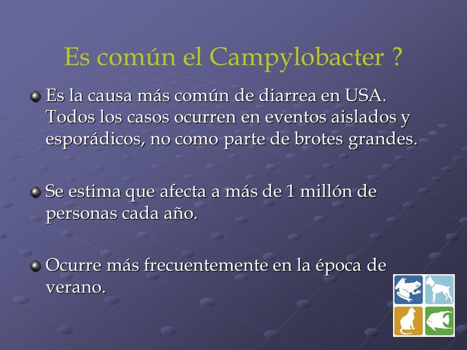 Es común el Campylobacter ? Es la causa más común de diarrea en USA. Todos los casos ocurren en eventos aislados y esporádicos, no como parte de brote