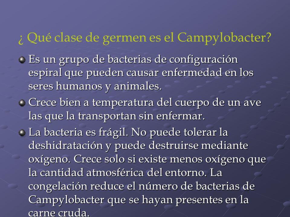 ¿ Qué clase de germen es el Campylobacter? Es un grupo de bacterias de configuración espiral que pueden causar enfermedad en los seres humanos y anima