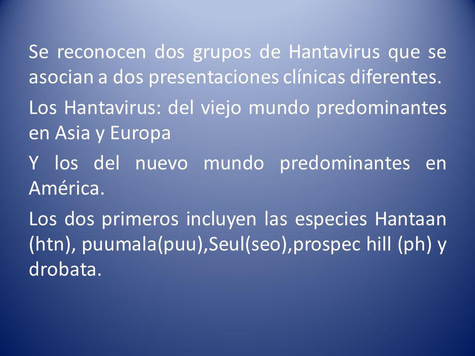 Se reconocen dos grupos de Hantavirus que se asocian a dos presentaciones clínicas diferentes. Los Hantavirus: del viejo mundo predominantes en Asia y