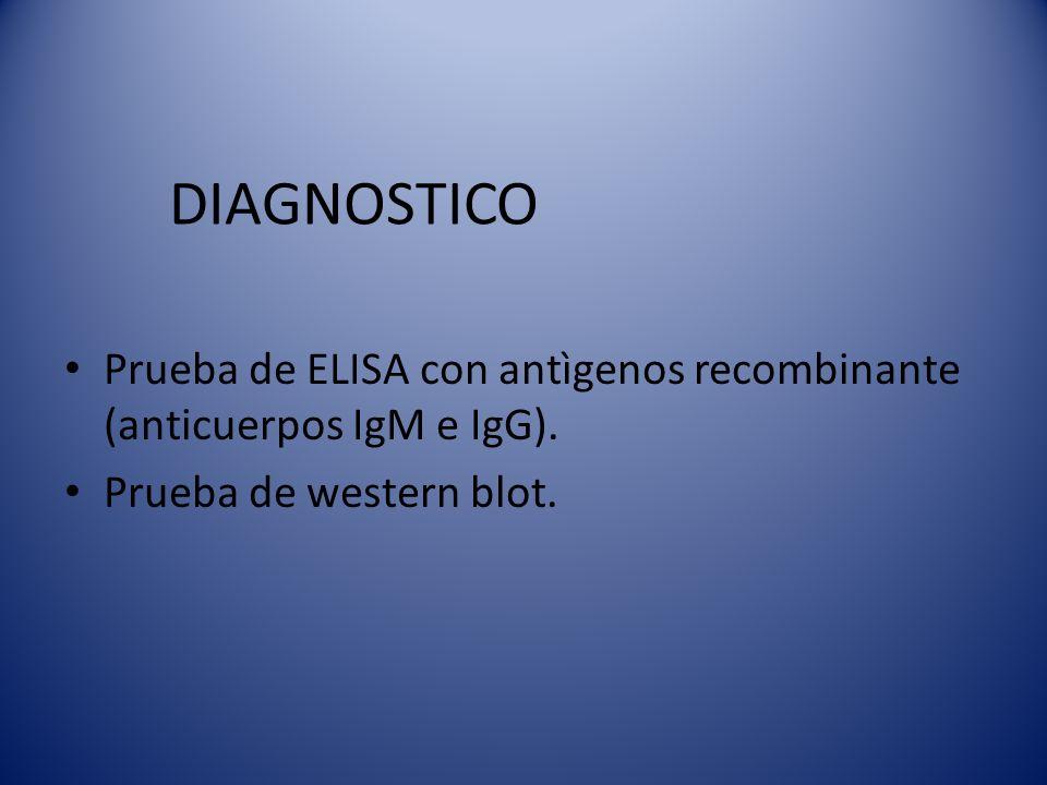 DIAGNOSTICO Prueba de ELISA con antìgenos recombinante (anticuerpos IgM e IgG). Prueba de western blot.