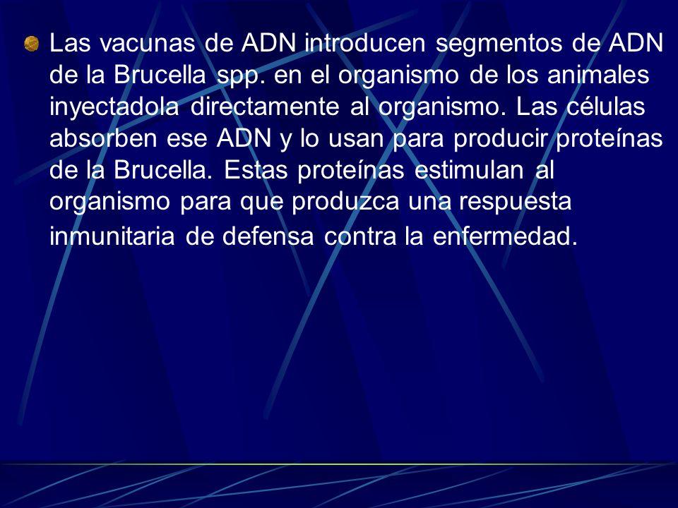 Las vacunas de ADN introducen segmentos de ADN de la Brucella spp. en el organismo de los animales inyectadola directamente al organismo. Las células