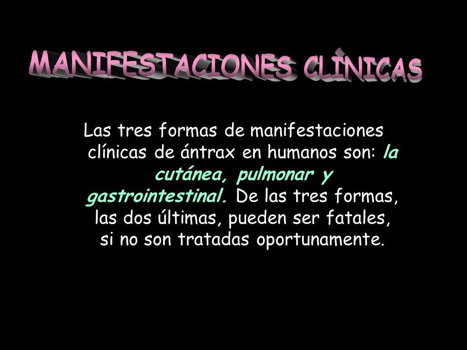 Las tres formas de manifestaciones clínicas de ántrax en humanos son: la cutánea, pulmonar y gastrointestinal. De las tres formas, las dos últimas, pu