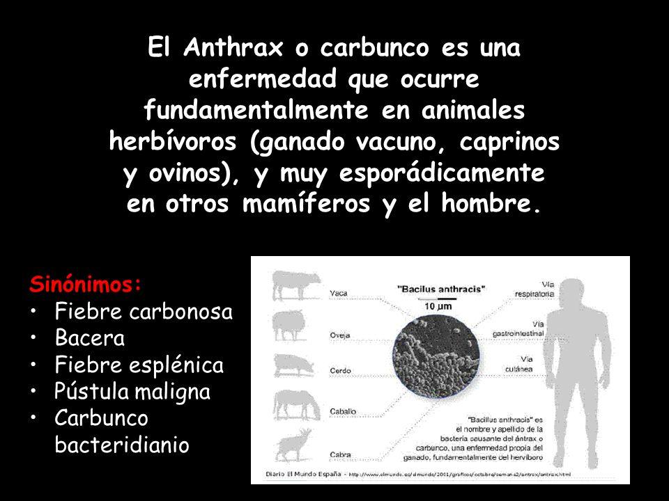 Sinónimos: Fiebre carbonosa Bacera Fiebre esplénica Pústula maligna Carbunco bacteridianio El Anthrax o carbunco es una enfermedad que ocurre fundamen