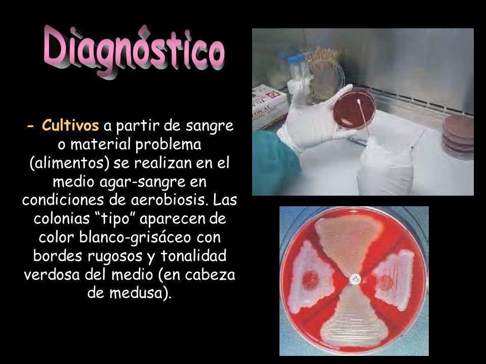 - Cultivos a partir de sangre o material problema (alimentos) se realizan en el medio agar-sangre en condiciones de aerobiosis. Las colonias tipo apar