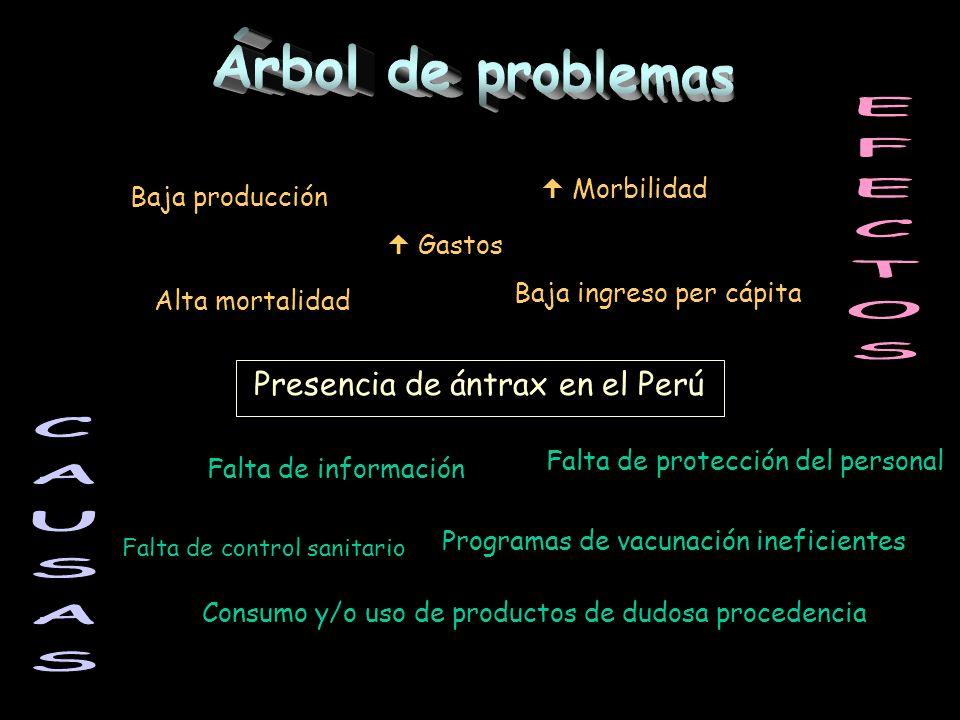 Presencia de ántrax en el Perú Falta de información Falta de protección del personal Falta de control sanitario Programas de vacunación ineficientes C