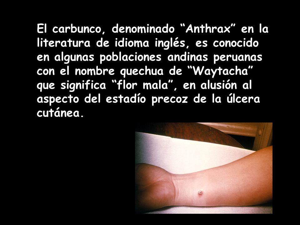 El carbunco, denominado Anthrax en la literatura de idioma inglés, es conocido en algunas poblaciones andinas peruanas con el nombre quechua de Waytac