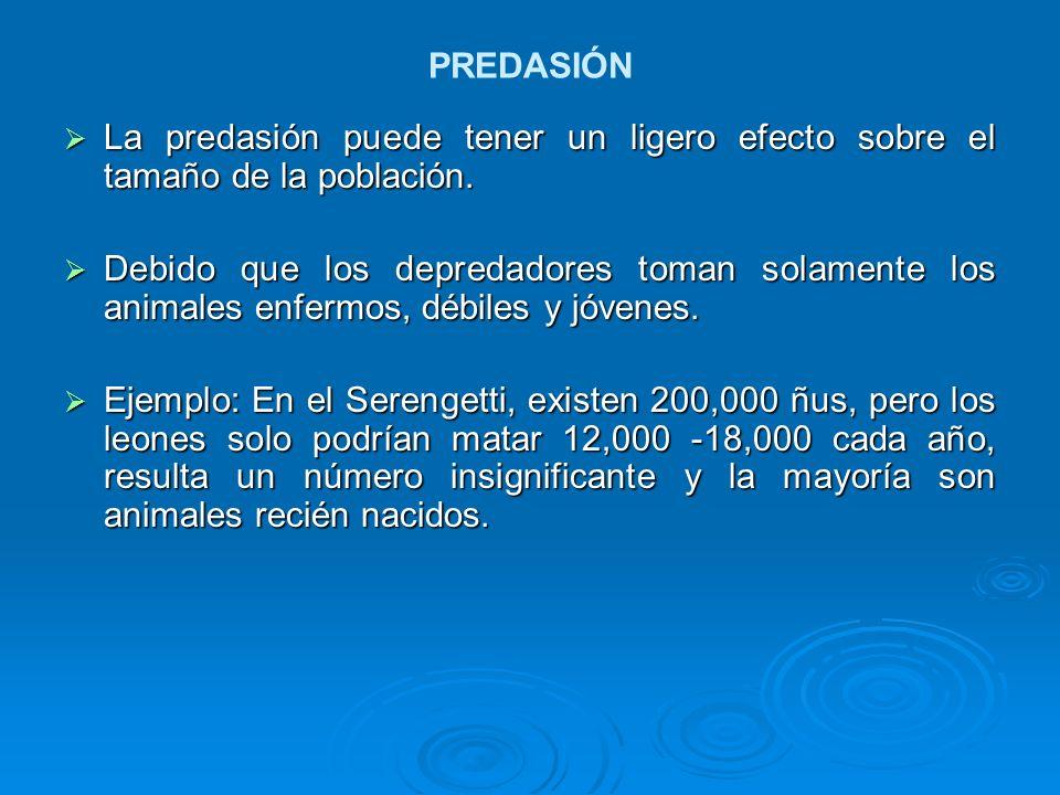 PREDASIÓN La predasión puede tener un ligero efecto sobre el tamaño de la población. La predasión puede tener un ligero efecto sobre el tamaño de la p