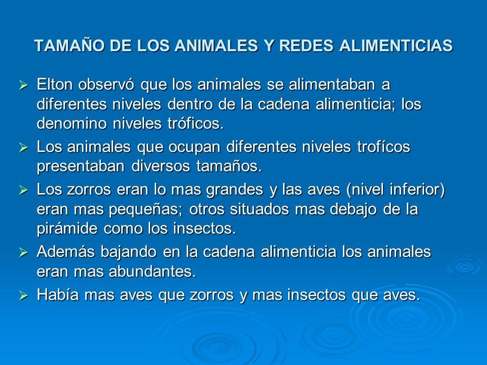 TAMAÑO DE LOS ANIMALES Y REDES ALIMENTICIAS Elton observó que los animales se alimentaban a diferentes niveles dentro de la cadena alimenticia; los de