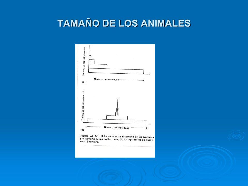 TAMAÑO DE LOS ANIMALES
