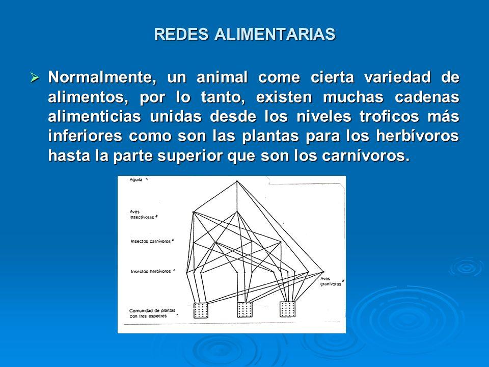REDES ALIMENTARIAS Normalmente, un animal come cierta variedad de alimentos, por lo tanto, existen muchas cadenas alimenticias unidas desde los nivele