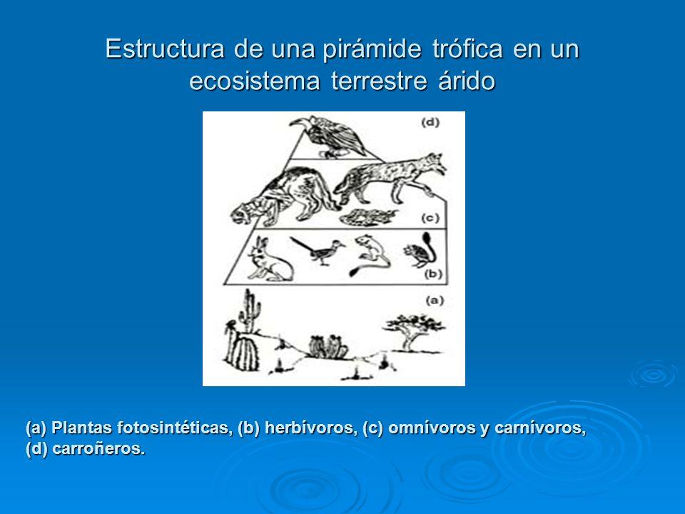 Estructura de una pirámide trófica en un ecosistema terrestre árido (a) Plantas fotosintéticas, (b) herbívoros, (c) omnívoros y carnívoros, (d) carroñ