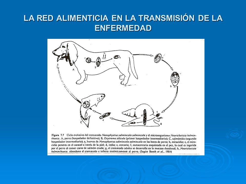 LA RED ALIMENTICIA EN LA TRANSMISIÓN DE LA ENFERMEDAD