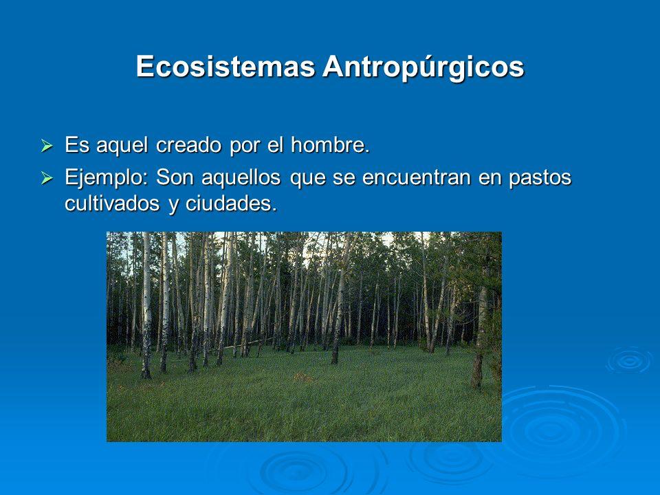 Ecosistemas Antropúrgicos Es aquel creado por el hombre. Es aquel creado por el hombre. Ejemplo: Son aquellos que se encuentran en pastos cultivados y