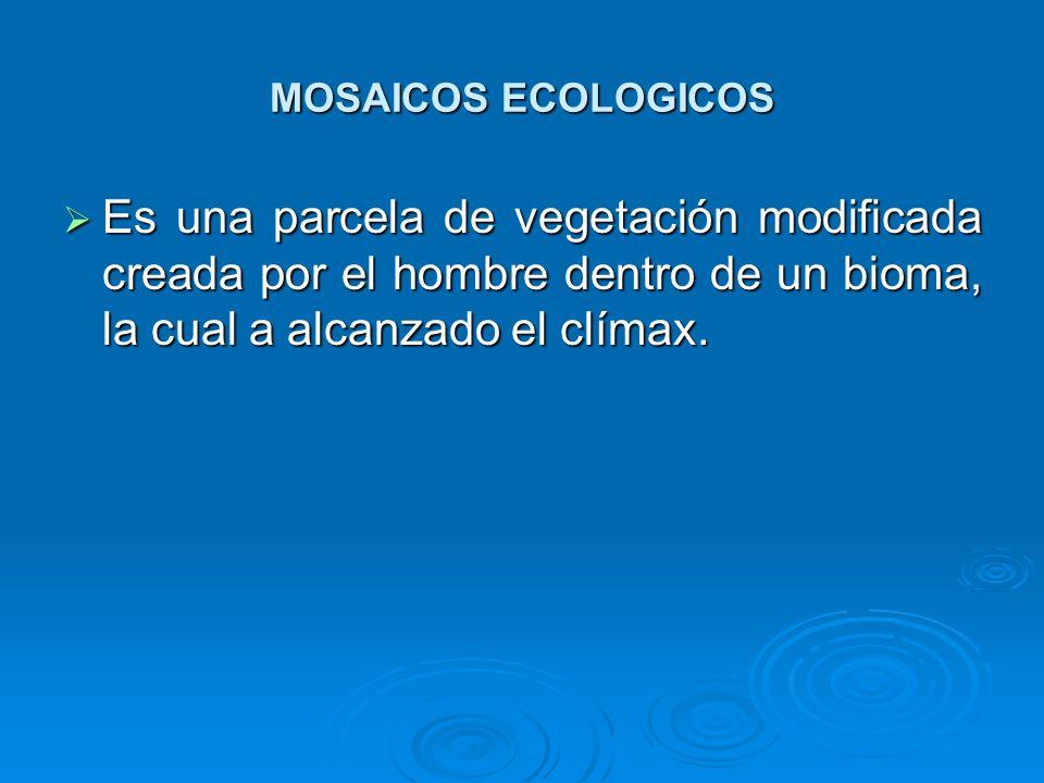 MOSAICOS ECOLOGICOS Es una parcela de vegetación modificada creada por el hombre dentro de un bioma, la cual a alcanzado el clímax. Es una parcela de