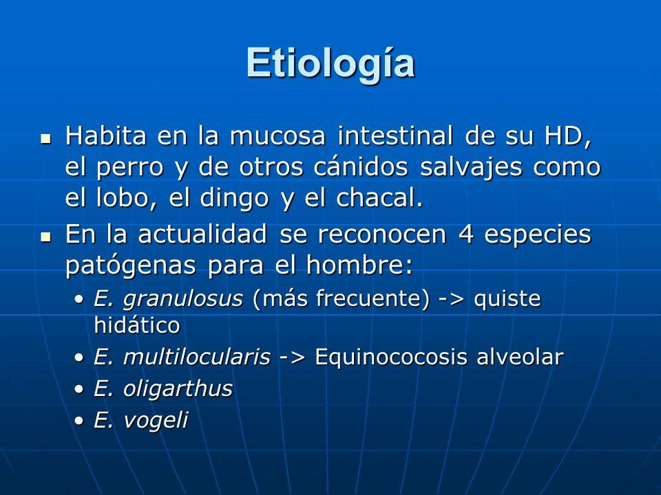 Etiología Habita en la mucosa intestinal de su HD, el perro y de otros cánidos salvajes como el lobo, el dingo y el chacal. Habita en la mucosa intest
