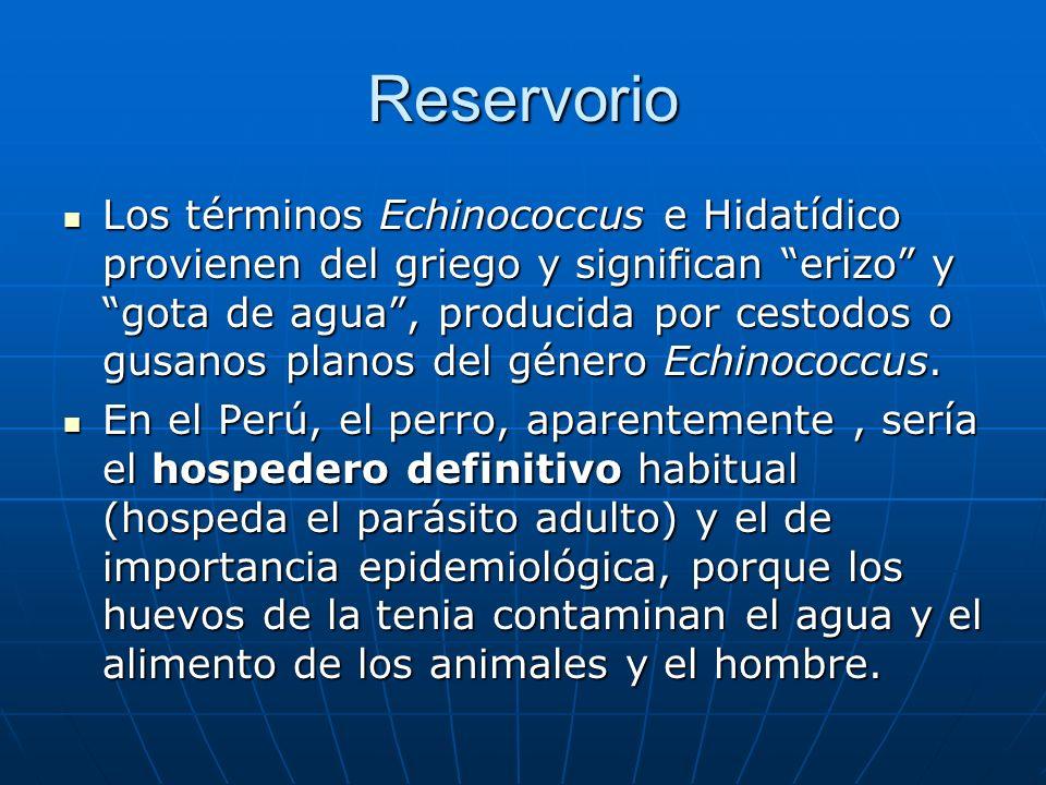Reservorio Los términos Echinococcus e Hidatídico provienen del griego y significan erizo y gota de agua, producida por cestodos o gusanos planos del