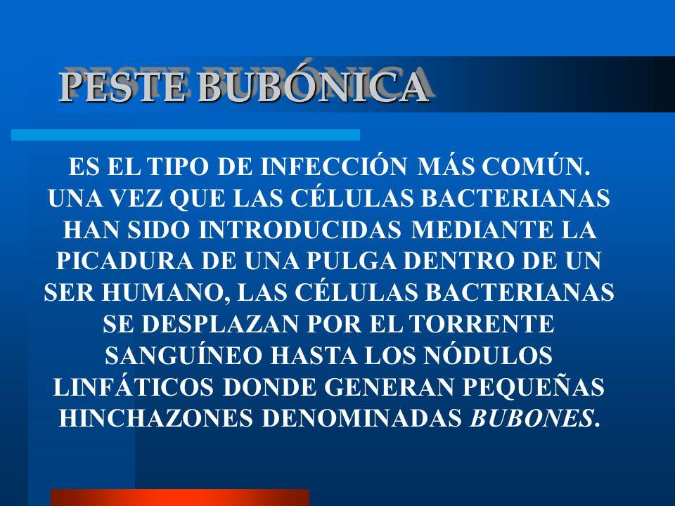 PESTE BUBÓNICA ES EL TIPO DE INFECCIÓN MÁS COMÚN. UNA VEZ QUE LAS CÉLULAS BACTERIANAS HAN SIDO INTRODUCIDAS MEDIANTE LA PICADURA DE UNA PULGA DENTRO D
