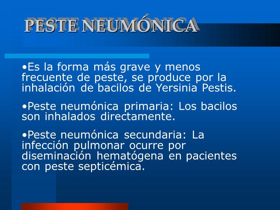 PESTE NEUMÓNICA Es la forma más grave y menos frecuente de peste, se produce por la inhalación de bacilos de Yersinia Pestis. Peste neumónica primaria