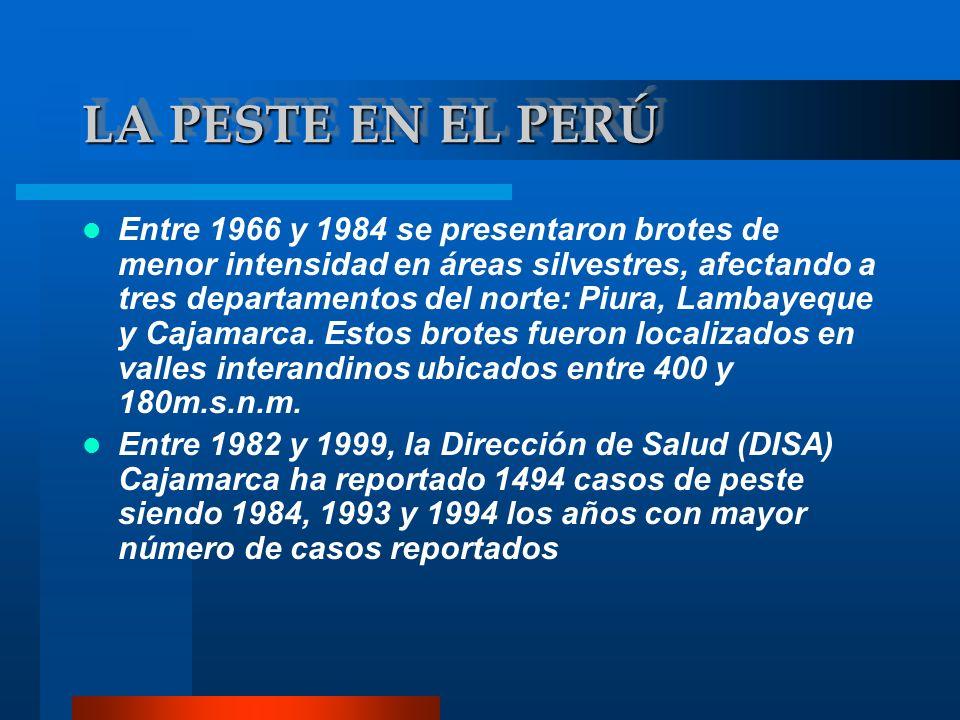 Entre 1966 y 1984 se presentaron brotes de menor intensidad en áreas silvestres, afectando a tres departamentos del norte: Piura, Lambayeque y Cajamar