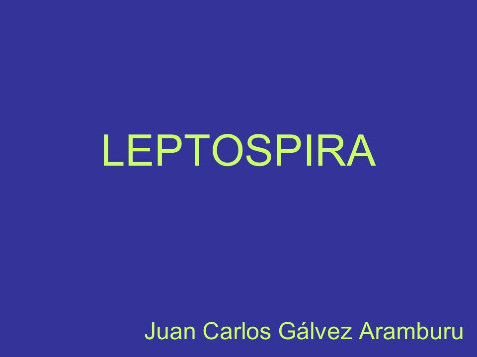 LEPTOSPIROSIS La leptospirosis es una enfermedad febril aguda que afecta a algunos animales y al ser humano.