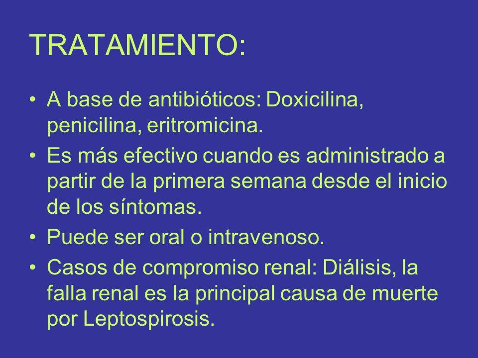 TRATAMIENTO: A base de antibióticos: Doxicilina, penicilina, eritromicina. Es más efectivo cuando es administrado a partir de la primera semana desde