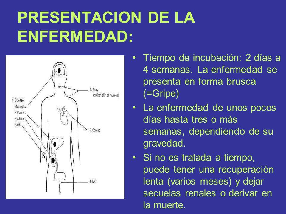 PRESENTACION DE LA ENFERMEDAD: Tiempo de incubación: 2 días a 4 semanas. La enfermedad se presenta en forma brusca (=Gripe) La enfermedad de unos poco